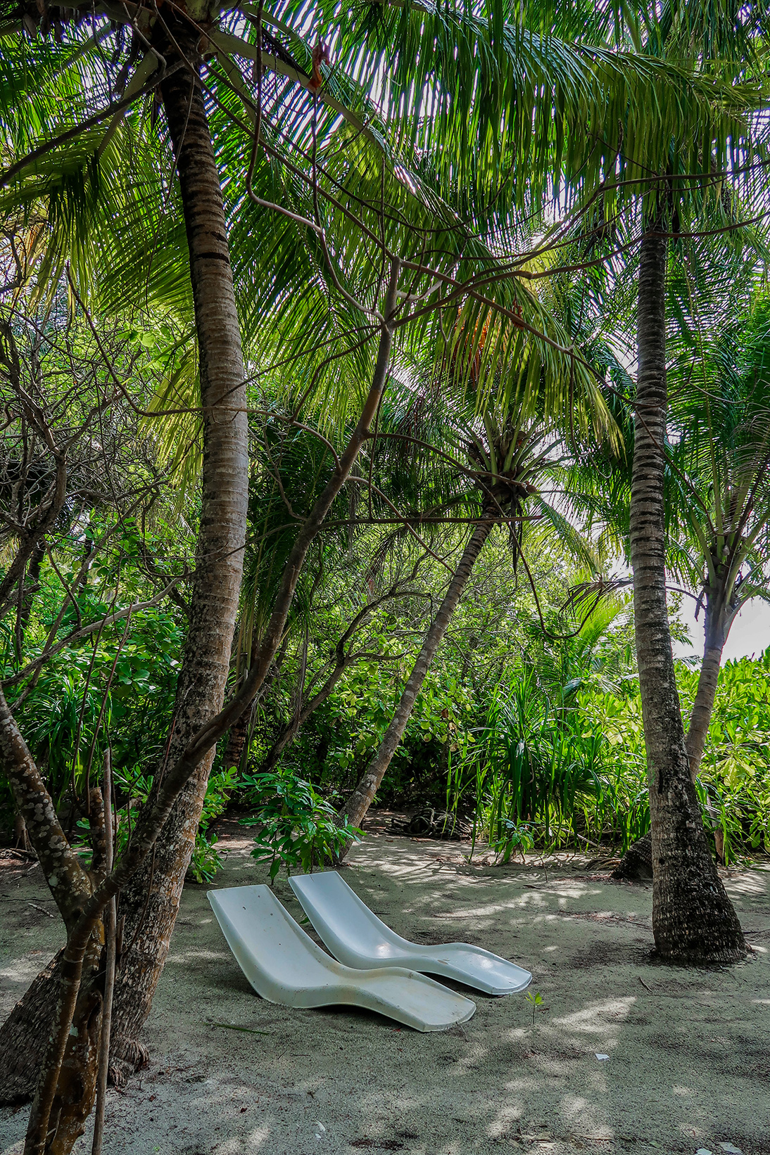 Omadhoo island jungle in the Maldives